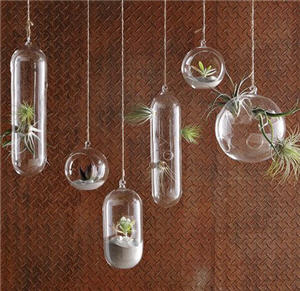 You can purchase a variety of air plant vases from WestElm.com. Photo:  WestElm.com.
