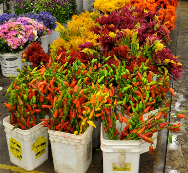 Halloween Flowers Succulents Wholesale