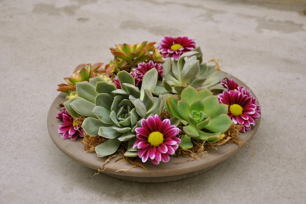 Fresh flowers and succulents dish by flowerduet.com