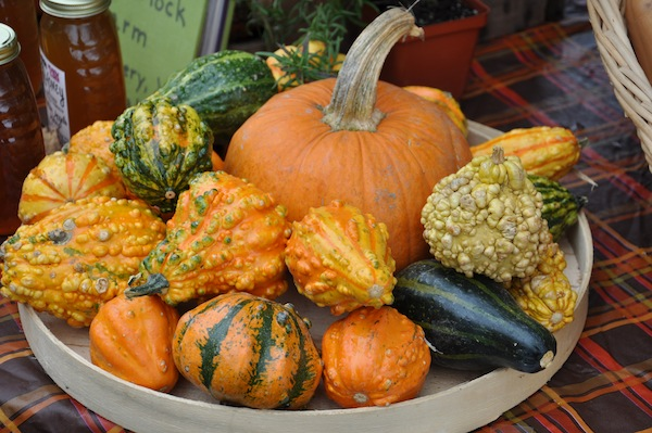 Fossil Farms Gourds