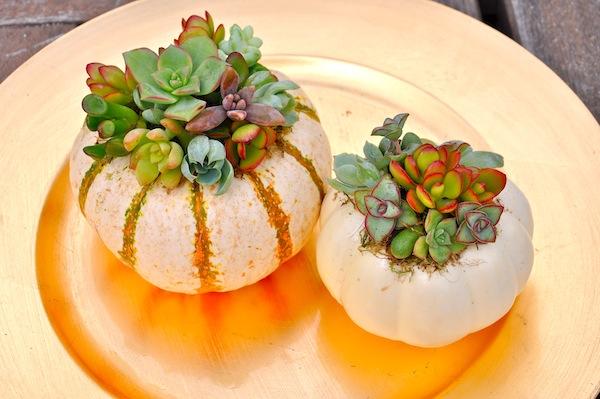 Mini Pumpkin Planters