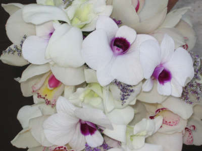 Flower Bouquets on Flower Arrangements   Winter Flowers   Elegant Orchids