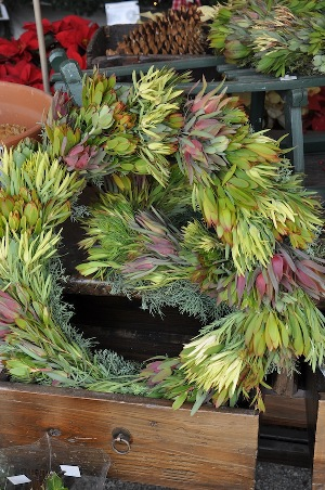 Protea Wreath