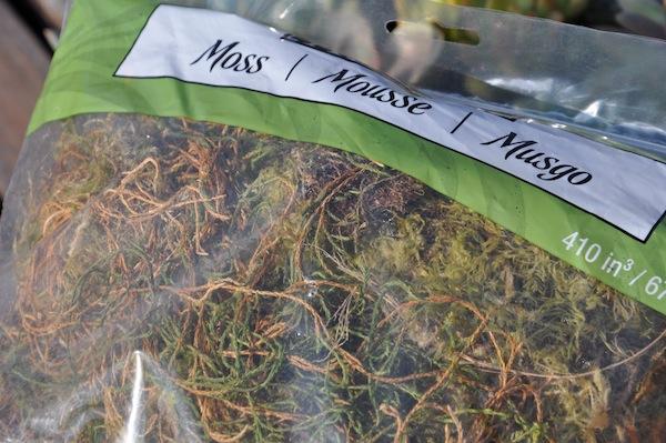 Succulent Pumpkin Moss