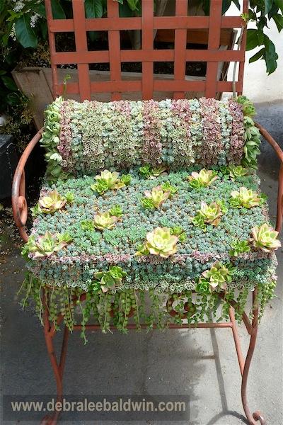 Succulent Chair by Debra Lee Baldwin