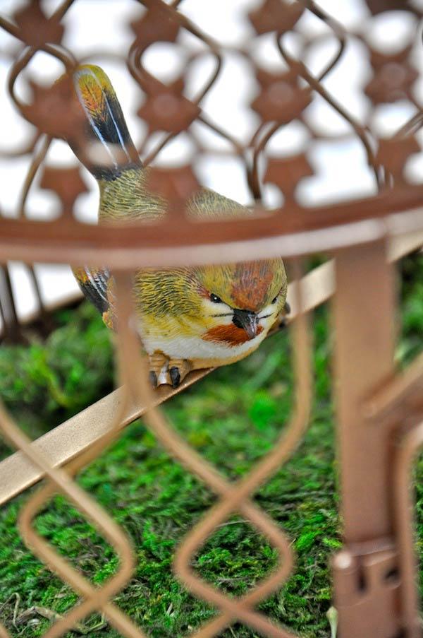 Terranea birdy