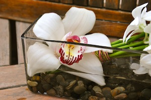 Tropical Mother's Day How to cymbidium